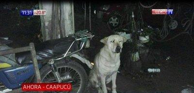 Perro mata a un niño de dos años en Caapucú