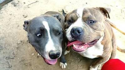 Dos perros escapan de casa y atacan a anciana recolectora de latitas: víctima pide ayuda