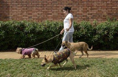 Atención gratuita para mascotas en la Plaza Uruguaya
