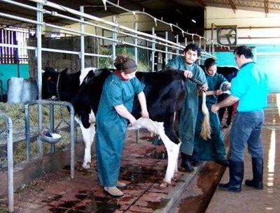 Senacsa mantiene restricción de vender leche caprina