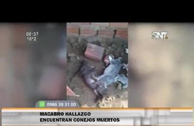 Macabro hallazgo: mujer encuentra sus conejos muertos por un perro
