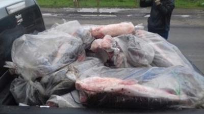 Decomisan una tonelada de pescado en zona de Falcón