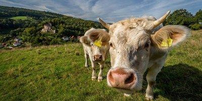 Cambios en ADN de animales domesticados afectarían la agricultura