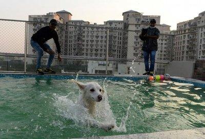 En India se habilitó un hotel de lujo para perros