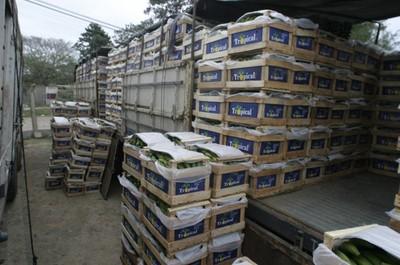 Senave busca mejorar producción de banana