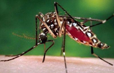 También habría casos de zika