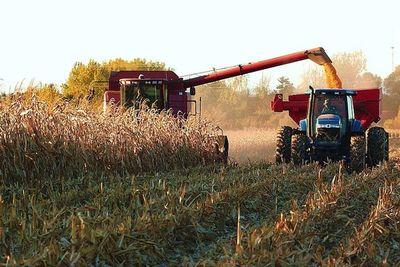 El maíz reduce su dependencia del mercado brasileño