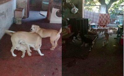 """¡Vive con 19 perros!: """"Trabajo para ellos"""""""