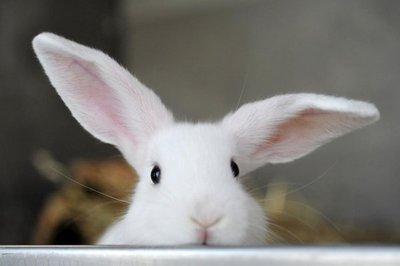 Los conejos relajados no se resfrían