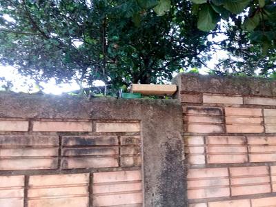 "Hallan ""ladrillo"" de marihuana sobre muralla en Hernandarias"