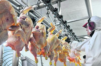 Nueva prohibición afecta exportaciones de pollo de Brasil a Arabia Saudita