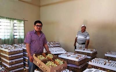 Incluyen a familias en proyectos de producción avícola