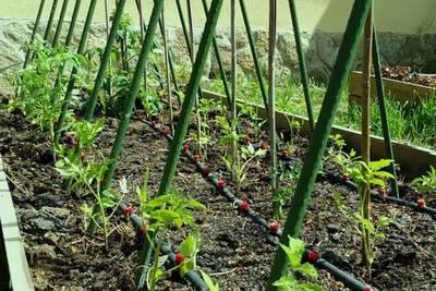 ONU premia a Paraguay por programa de agricultura familiar