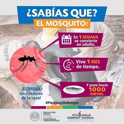 Un mosquito Aedes puede producir hasta mil huevos