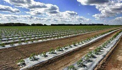 Crean sistema que mide agua en suelos con fines agrícolas