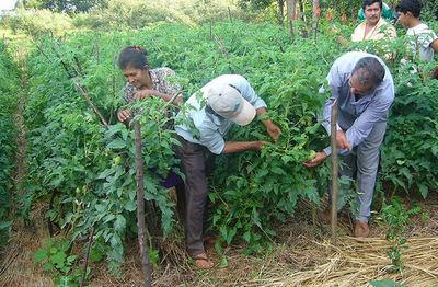 Cuatro de cada 5 pequeños productores siguen trabajando de manera precaria
