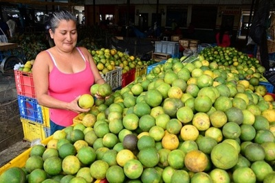 MAG da a conocer precios de referencia para productos frutihortícolas.