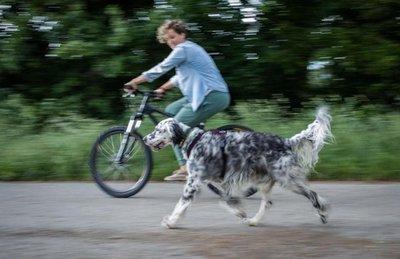 Paseos en bicicleta con el perro, diversión asegurada