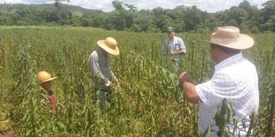 MÁS DE 350.000 PARAGUAYOS SE BENEFICIAN CON PROGRAMAS DE IMPULSO A LA AGRICULTURA FAMILIAR