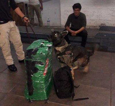 Planeaba viajar a España con cocaína en la maleta