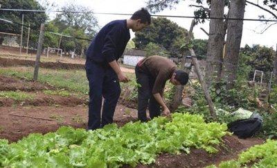 Heladas: Cultivos extensivos fuera de peligro, pero hortícolas en riesgo