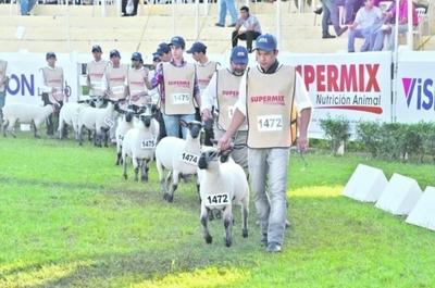 Unos 300 ovinos de distintas razas participarán de la Expo de Mariano Roque Alonso