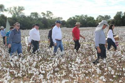 Realizan de Día de Campo sobre Algodón en Loma Plata