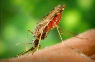 Casos de malaria, controlados