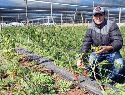 Helada afectó cultivos de hortalizas en Caaguazú