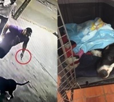 A puñaladas defendió a sus mascotas de un pitbull