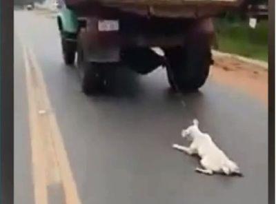 Captan brutal maltrato animal y exigen justicia
