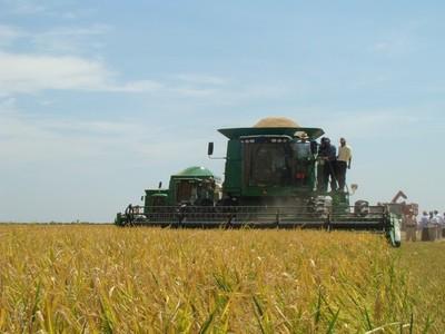El arroz paraguayo logra la apertura del mercado de Irak y concreta una venta de 30 mil toneladas