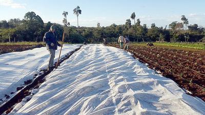 Productores reportan heladas en algunas zonas del Alto Paraná