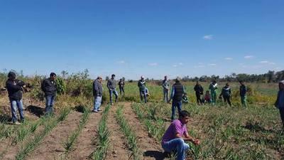 MAG realiza Día de Campo sobre cultivo de cebolla