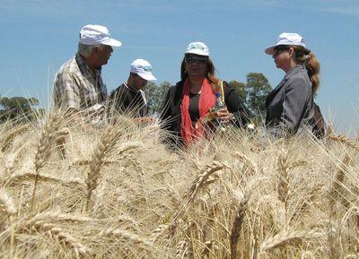 Últimas heladas beneficiaron al trigo y perjudicaron otros rubros