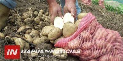 PRODUCTORES DE PAPA AGUARDAN SEMILLAS QUE SERÁN ENTREGADAS POR EL MAG.
