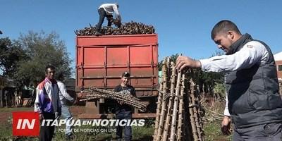 AMPLÍAN PRODUCCIÓN DE MANDIOCA CON FINES INDUSTRIALES EN ITAPÚA.
