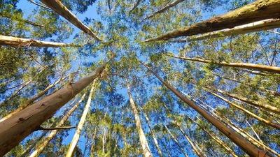 La reforestación es el futuro de la industria maderera