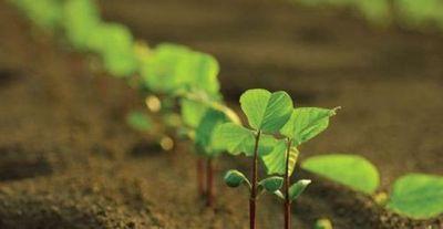 Comienza la siembra temprana de soja