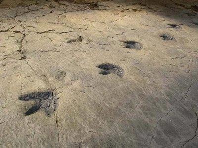 Las huellas de los dinosaurios, aire fresco para el ecoturismo