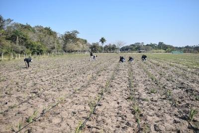 Familias rurales adquirirían buena producción de plantas medicinales