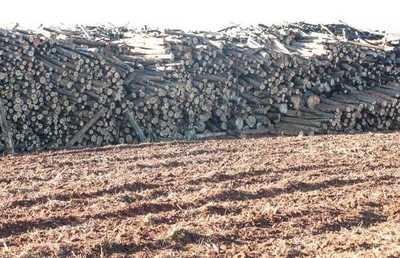 """Rubro forestal tiene un déficit de 100.000 hectáreas a cubrir """"lo antes posible"""""""