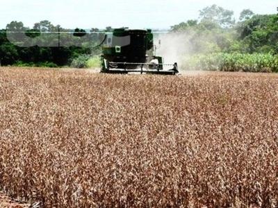 Compañía china lidera las exportaciones de soja