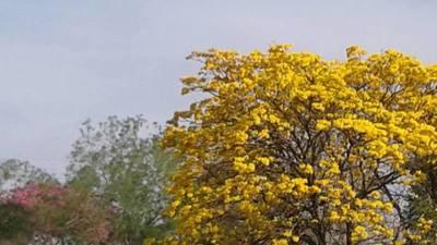 Inicio de la primavera con ambiente caluroso y sin lluvias para el sur