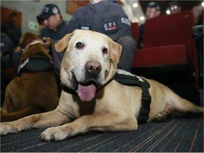 Fiscalía colombiana condecora a 14 perros que se jubilan de la entidad