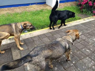 Universidad de México emplea a tres perros como guardias