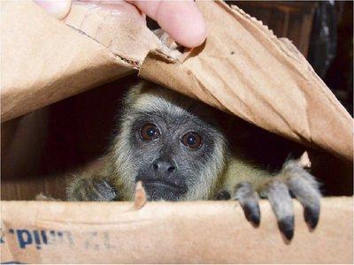 Venta ilegal: Rescatan animales silvestres en el Mercado 4 de Asunción