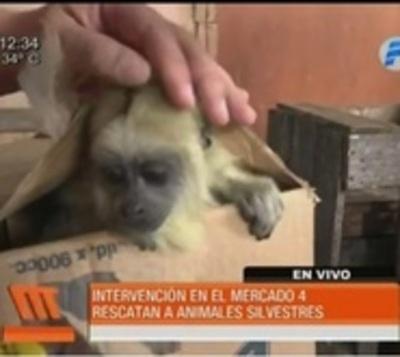 Rescatan animales exóticos del Mercado 4