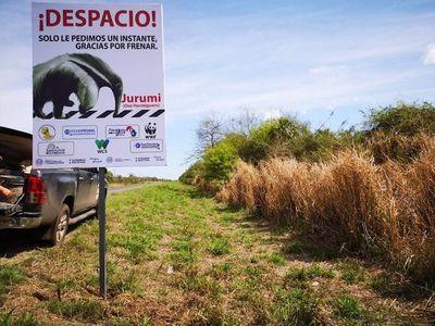 """Obras en el Chaco incluirán """"pasafaunas"""" para proteger a especies en peligro"""