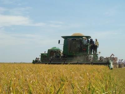 Por los altos costos algunos arroceros uruguayos deciden comenzar a plantar en Paraguay